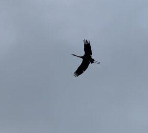 NatuurlijkBegaafd Geluk kraanvogel